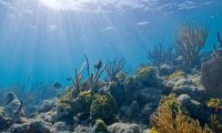By The Coral Reef with diver breathing