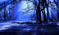 Peaceful Night Forest