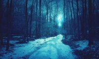 Strange, enticing sounds from the dark winter forest