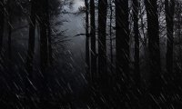 https://www.ambient-mixer.comRainy forest night