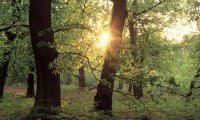 https://www.ambient-mixer.comSherwood Forest