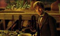 Inside Newt's Suitcase