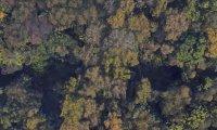 forest sound