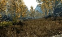 Riften woods in Skyrim