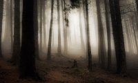 http://www.ambient-mixer.comEerie Dark Forest