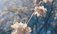 Spring time in a garden