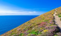 A calm summer meadow by the sea