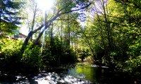 Chants d'oiseaux dans la forêt
