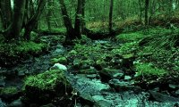 Forest stream on a rainy day