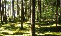 Sunlit Woodland Stroll
