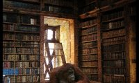 Have a quiet moment in the Lost Reading Room of Unseen University-you may never find your way back