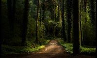 Walking through the Ebonwood