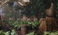 Harry Potter's Herbology Class