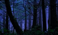 http://www.ambient-mixer.comNighttime Forest