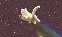 ' + *Galaxy Cats! * .'