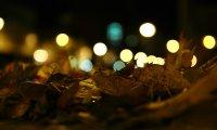Cozy Autumn Night