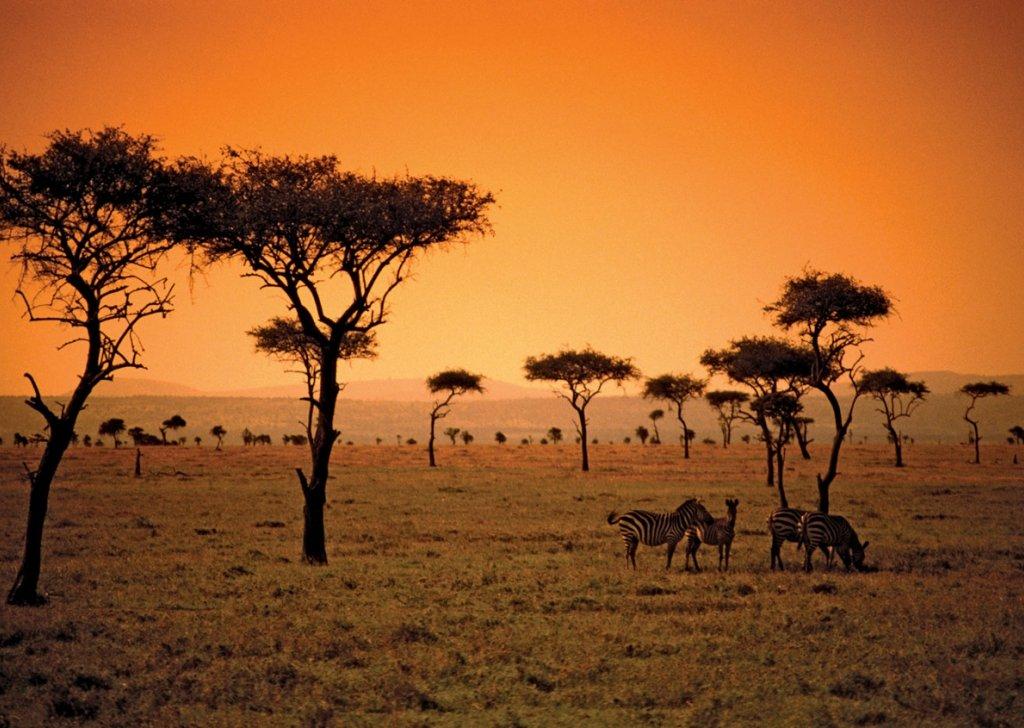 Africa Grasslands 66