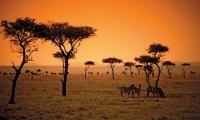 Verdant African Grasslands with Animal Calls and Birdsong