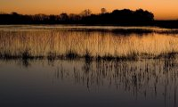http://www.ambient-mixer.comNatural sounds from the Canadian Wetlands