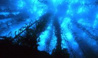 https://www.ambient-mixer.comThis Atmosphere has of 5 Ocean samples & 1 WindChime.
