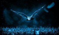 Owls and Wildlife