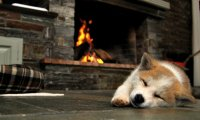 A dog snoring by a fire during a small thunder storm