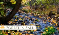 Forest in Fall Ambience