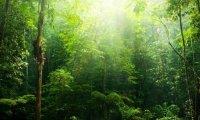 Forest Day Summer/Spring Pathfinder
