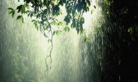Heavy rain in a forest