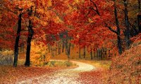 https://www.ambient-mixer.comCrisp Fall Day