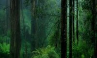 http://www.ambient-mixer.comInto the rainforest,