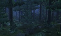 The peaceful lull of a forest night