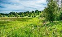 Calm meadows ahead