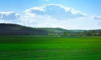 Open and Verdant Grasslands