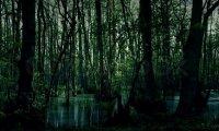 Swamp ambiance
