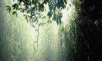 Rain Ambient sounds Birds Calm