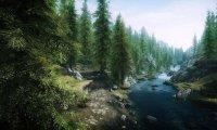 Elder Fir Forest