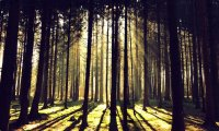 http://www.ambient-mixer.comMorning Forest