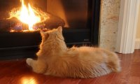 http://www.ambient-mixer.comCalming fireplace