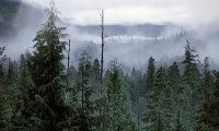 https://www.ambient-mixer.comPBP Forest Post