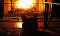 https://www.ambient-mixer.comFireplace reading with the cat