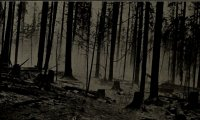http://www.ambient-mixer.comDark magic in the woods at night.