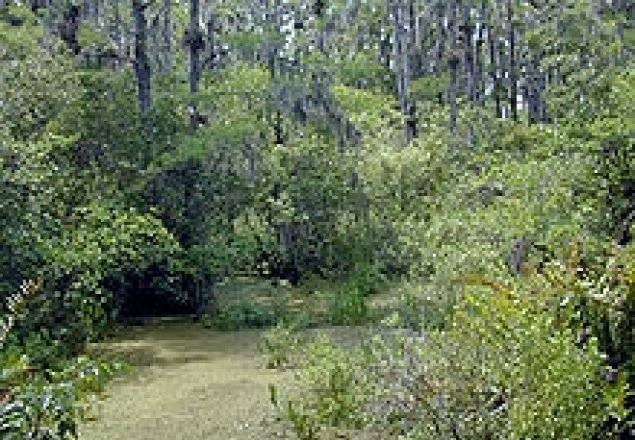 poetic analysis of crossing the swamp by mary oliver essay