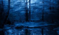 http://www.ambient-mixer.comNighttime in a Winter Forest