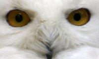 An Owly Night