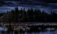 Eternal Night in a Northwest Forest