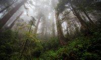 Restful Forest