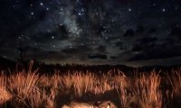 Sleeping Under The Stars with a Wolf