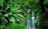 http://www.ambient-mixer.comAn exotic, hidden waterfall