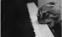 Cat and jazz